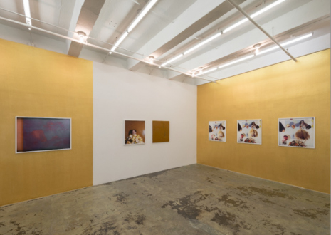 Hoar Frost – Elaine Stocki - Installation view: east and south wall
