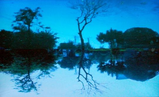 Nadia Khawaja – Drawings – Videos- Photographs - Nadia Khawaja, Treety, 2010. Video loop, ed. of 3 (+2 AP).