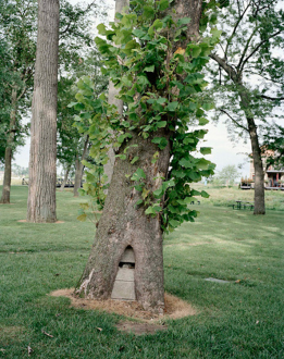 On Permanence and Change – Barry Gerson, Duy Hoang, Nandita Raman and Giovanna Sarti - Nandita Raman: Tree, 2011. Archival inkjet print mounted behind Plexi mirror, edition of 3 (+1 AP), 25 x 20 in.